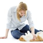 Les formations pour devenir auxiliaire de vie animalier